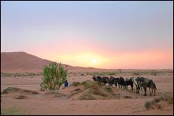 Hispania Tours Rider with Camel